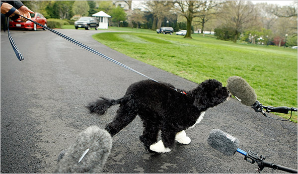 What Type Of Dog Does President Obama Have